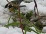 2a o ptaki zimą dba